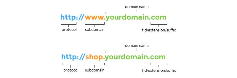 domain anatomy
